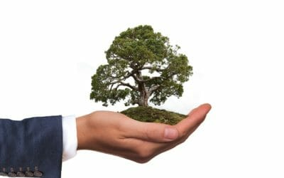 How to Boost Your Business' Eco Credentials